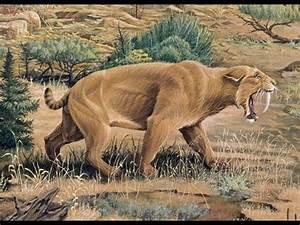 Top 10 Strange Extinct Creatures That Were Rediscovered ...