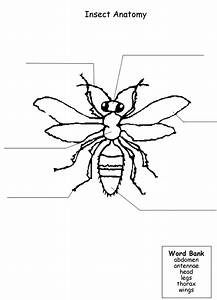 Printable Worksheet To Label Parts Of An Insect