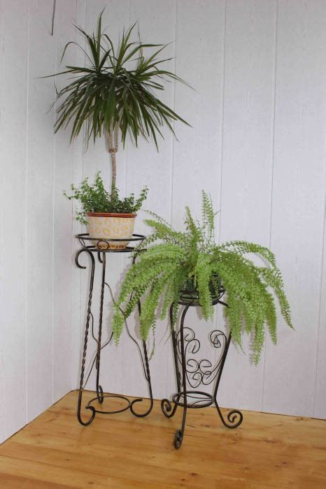 beautiful potted plants  inspires beauty gravetics