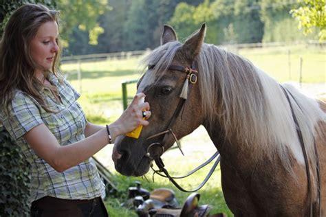 bisse und insektenstiche beim pferd homoeopathisch behandeln