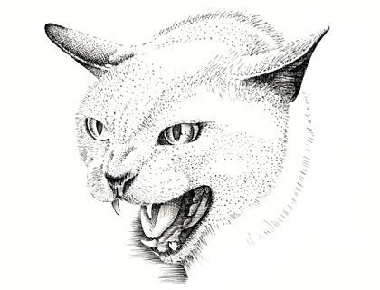 cat drawing   clip art  clip art