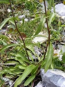 Welche Blumen Kann Man Essen : welche pflanze ist das wie heisst sie pflanzen natur ~ Watch28wear.com Haus und Dekorationen