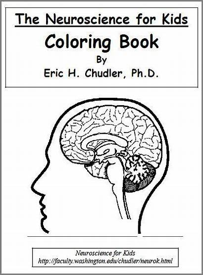 Brain Coloring Worksheets Science Human Printable Pages