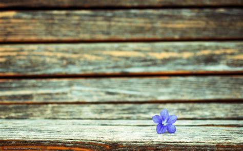 bureau fond d 馗ran tlcharger fond d 39 ecran fullscreen fleur fond macro fonds d 39 ecran gratuits pour votre rsolution du bureau 1920x1200 image 574949