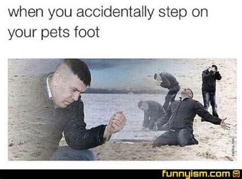 accidentally step   pets foot funny pics