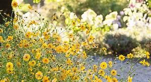 Que Planter En Juin : que planter en juin au jardin pour avoir des fleurs cet t ~ Melissatoandfro.com Idées de Décoration