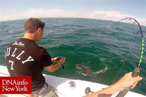 video baby great white shark caught  rockaway beach