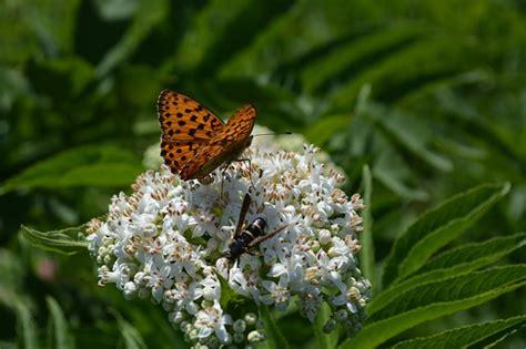 gambar july  mewarnai gambar bunga glitter hasil