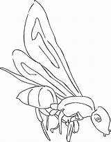 Coloring Ants Pages Lynch Marshawn Ant Farm Building Template sketch template
