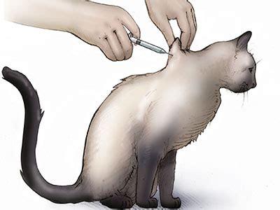 feline diabetes cornell university college  veterinary