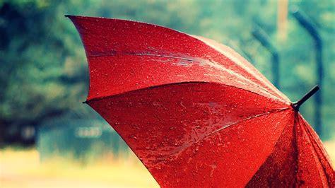 umbrella wallpaper wallpapers high quality free