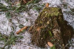 Baumstumpf Verrotten Beschleunigen : baumstumpf entfernen so geht s meister meister blog ~ Watch28wear.com Haus und Dekorationen
