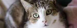 Site De Discussion : adoption chat animaux adopter avec la spa ~ Medecine-chirurgie-esthetiques.com Avis de Voitures