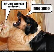 funny cats and dogs wi...
