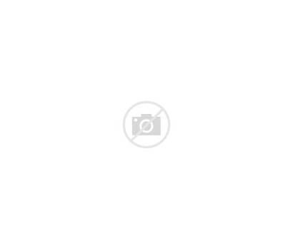 Panda Animal Head Face Wild Cartoon Vector