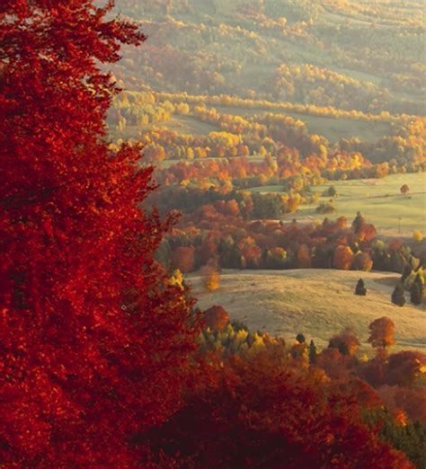 beautiful fall landscape    tips