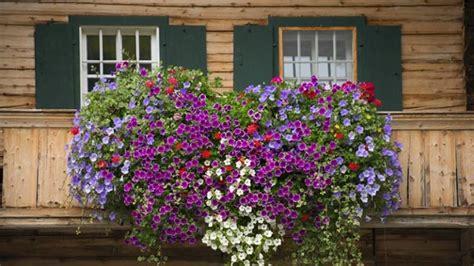 Balkonpflanzen: Diese Pflanzen Eignen Sich Besonders Gut
