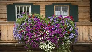 Blumenkästen Bepflanzen Sonnig : hikigaya3 blumen f r balkonk sten sonnig ~ Frokenaadalensverden.com Haus und Dekorationen