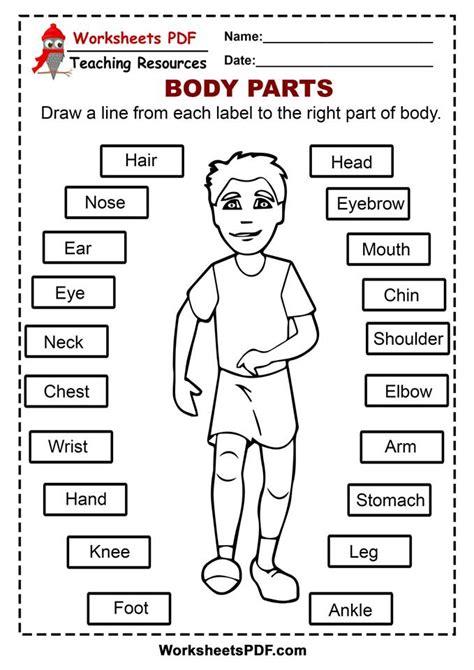 worksheets  body parts  printables