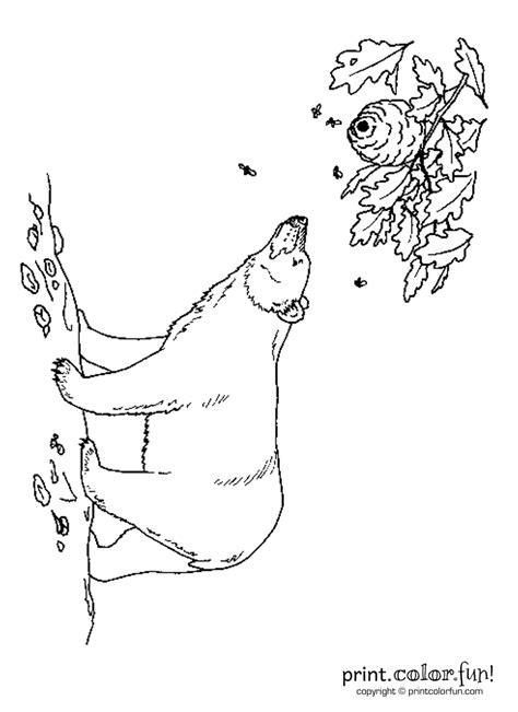 black bear  bees coloring page print color fun