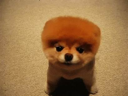 Dog Gifs Boo Adorable Puppy Dogs Cut