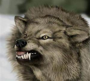 Irrelevant Musings by a MadJellyfish: Wolf to Woof...