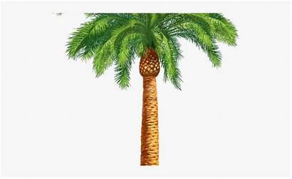 Clipart Tree Drawing Palm Khajur Date Transparent