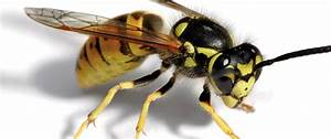 The Wasp War Of 2014