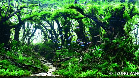 previous years contest  iiac aquascaping contest