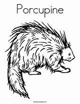 Porcupine Coloring Twistynoodle Printable Animal Noodle Twisty Preschool Porcupines Cartoon Malvorlagen sketch template