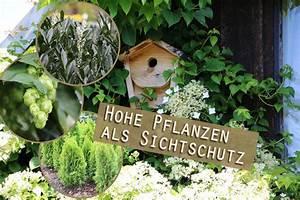 Garten Sichtschutz Pflanzen : 11 hohe pflanzen als sichtschutz garten und k belpflanzen ~ Watch28wear.com Haus und Dekorationen