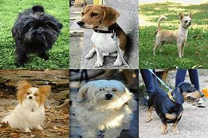 Cute Dog Names For Small Dogs - impremedia.net