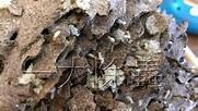 防治白蟻,先知道要防治白蟻種類,和防治白蟻習性,才能事半功倍有效的防治白蟻。 - 一大除蟲公司