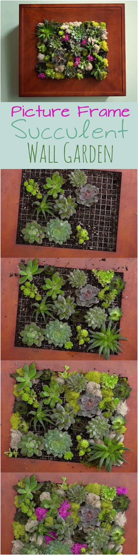 Vertical Succulent Garden Indoor by Best 25 Succulent Wall Gardens Ideas On