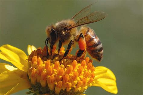 Bee | The Biggest Animals Kingdom
