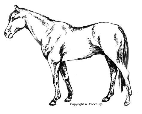 disegni da pitturare per adulti animali disegni da colorare per adulti con disegni di