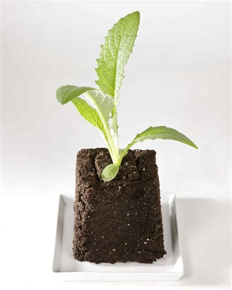 Planning Your Vegetable Garden  Martha Stewart