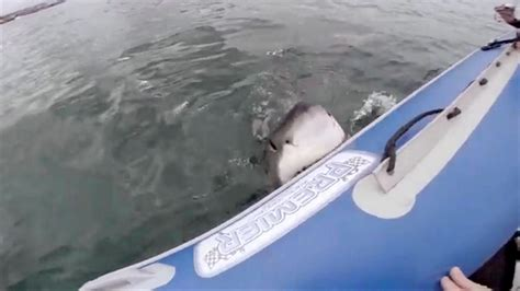 Great White Attacks Boat In Gulf by Katharine The Great White Shark Is Swimming Toward