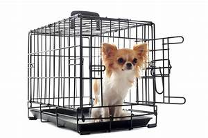 best dog crate for your dog a guide to finding the right With best dog crates for small dogs
