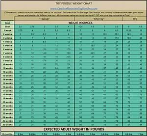 Toy Poodle Weight Chart Carolinamountaintoys
