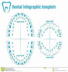 34 Dental Diagram Tooth Numbers