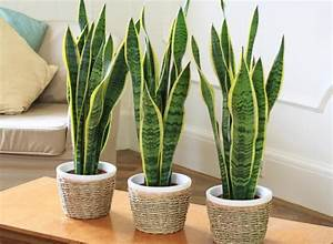 The, Best, Houseplants, And, Planters, For, Tiny, Apartments