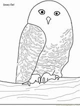 Owl Snowy Coloring Pages Pdf sketch template
