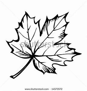 Maple Leaf Clipart Black And White | Clipart Panda - Free ...