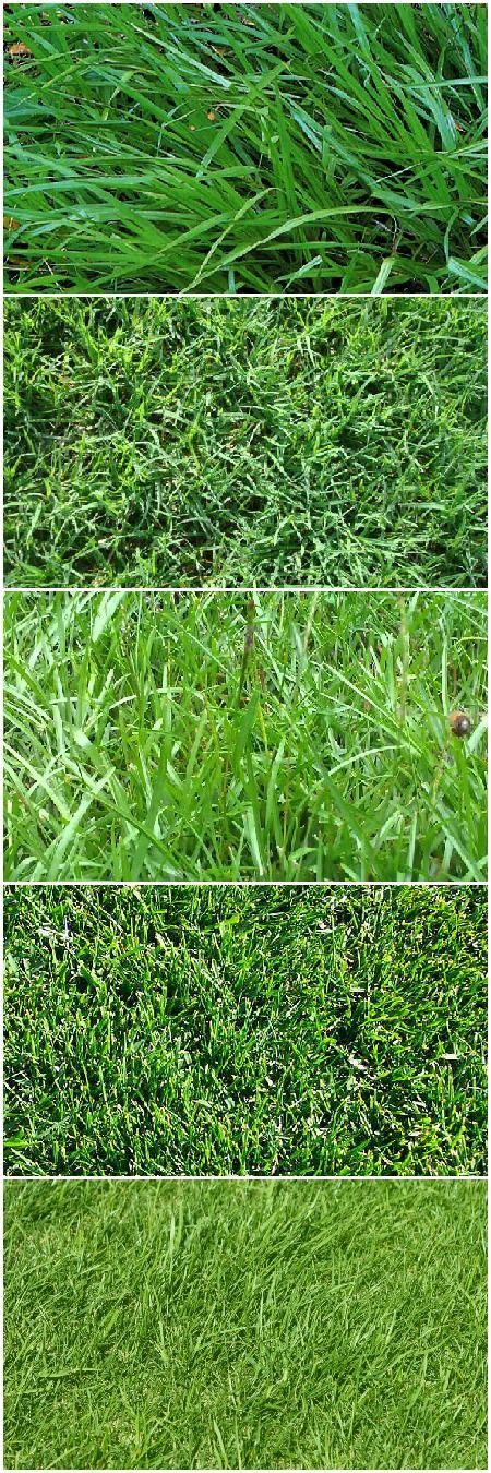 southern grass types 25 best ideas about types of lawn grass on pinterest