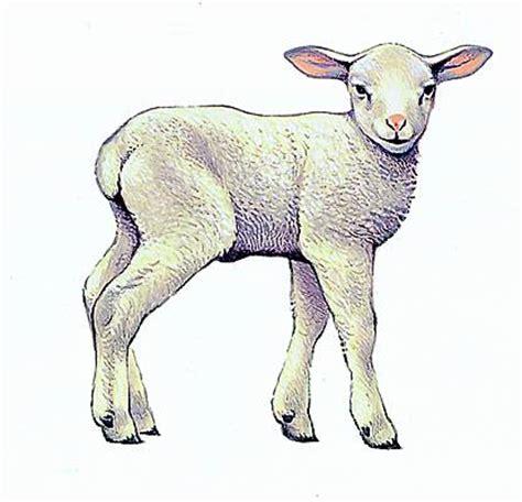larousse de cuisine encyclopédie larousse en ligne agneau