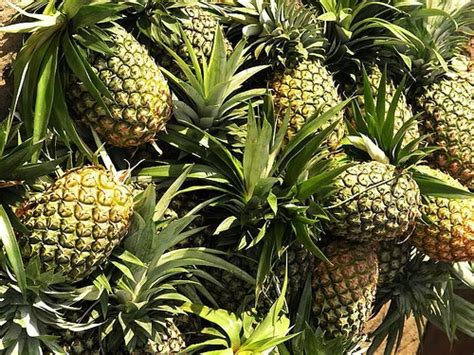 philippine fruits   eat  boost  vitamin