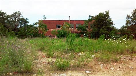 The Intricate Ecology…of Vacant Lots | WTTW Chicago