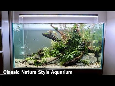 tutorial aquascape nature aquarium aquascape tutorial low maintenance home
