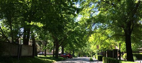 magic  tree lined streets strong towns